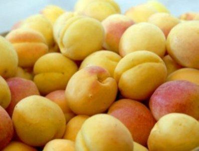 Замминистра: Экспорт абрикосов из Армении – рекордный за последние 7 лет