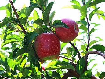 ОАЭ заинтересованы в инвестициях в сферу сельского хозяйства Армении