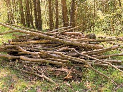 Վարչապետ. Անտառամերձ գյուղերի անապահով բնակիչները պետք է իրավունք ունենան անվճար հավաքել չորացած ոստերը