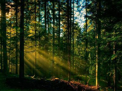 Белоруссия поможет Армении модернизировать контроль над лесами
