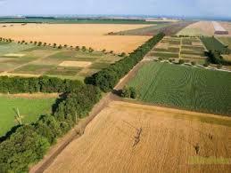 Նախատեսվում է բարձրացնել գյուղատնտեսական նշանակության հողերի նպատակային օգտագործման մակարդակը