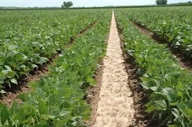 Հայաստանի Հանրապետությունում այգեգործության զարգացման 2020-2023 թվականների ծրագիր