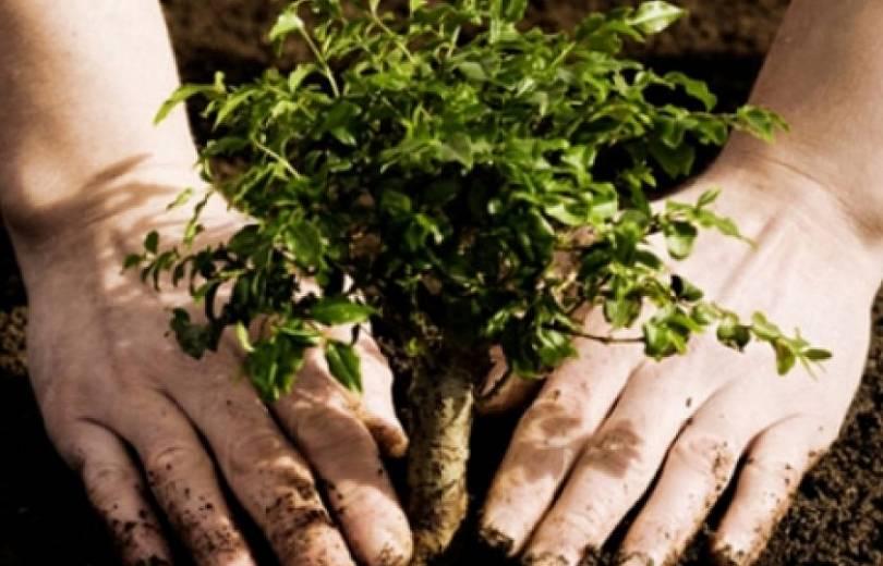 Վճարովի ծառատունկը մեկնարկել է. քաղաքացիները անտառ են ստեղծում, միաժամանակ փոքր-ինչ թեթեւացնում սոցիալական բեռը