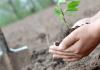 Օրական 5000 դրամ՝ անտառների վերականգնման և անտառապատման աշխատանքների համար