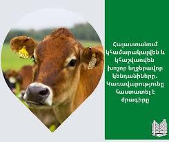 Հաստատվել է Հայաստանի Հանրապետությունում խոշոր եղջերավոր կենդանիների համարակալման և հաշվառման ծրագիրը