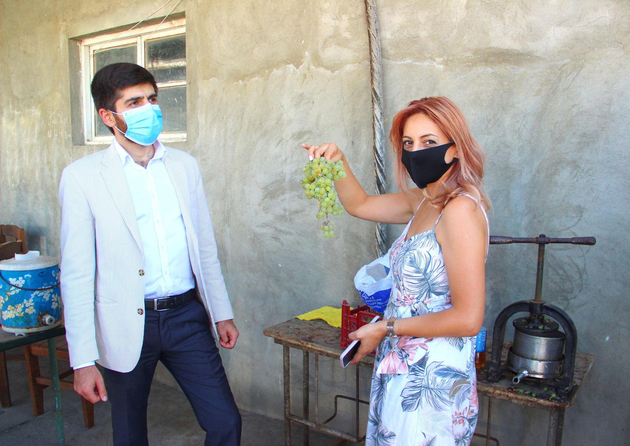 Արման Խոջոյանը Արարատի մարզում հետևել է խաղողի մթերումների ընթացքին
