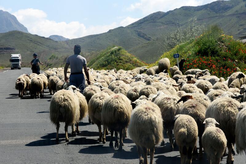 Արցախից Հայաստան կենդանի կենդանիների և մսեղիքի տեղափոխումը վերահսկվում է