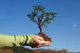 23.500 ծառ է տնկվել մարզում տեղի ունեցած ծառատունկին