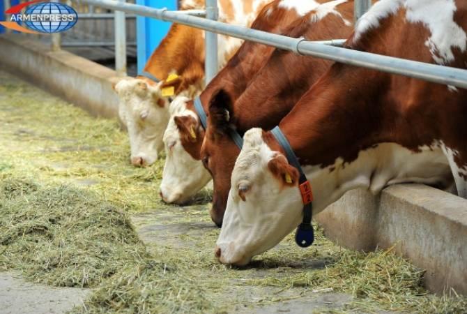 Խոշոր եղջերավոր կենդանիների համարակալման, հաշվառման համար նախատեսված գումարը վերադարձվել է պետբյուջե