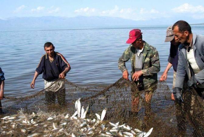 Սևանա լճում սիգի որսի ժամկետը երկարաձգվեց մինչև հոկտեմբերի 15-ը, 50 տոննայով ավելացվեց չափաքանակը
